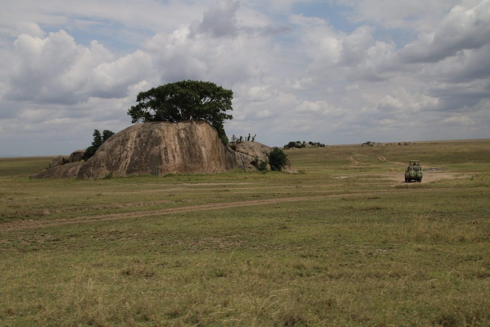 jeep_safari-tanzania_deni-beat-blog