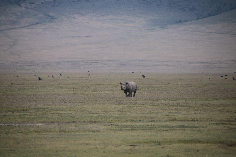 rinocronte_safari-tanzania_deni-beat-blog