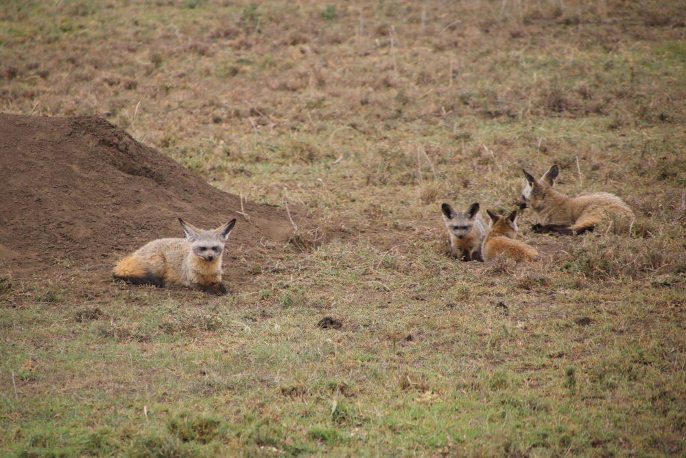 _safari-tanzania_deni-beat-blog